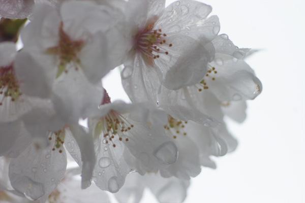 春雨1.jpg