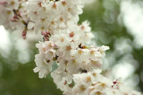 春雨2.jpg