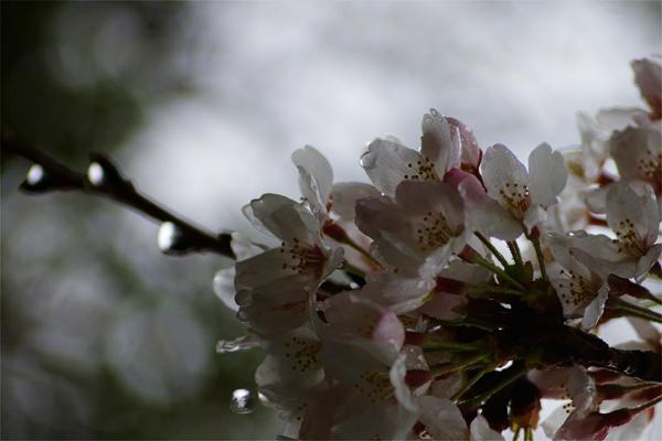春雨3.jpg